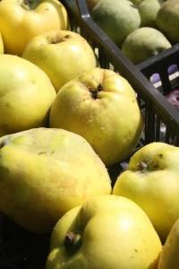 Mele e pere cotogne, i frutti antichi si trovano in riva al Naviglio